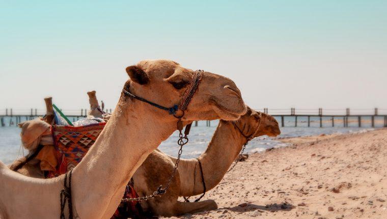 Presentación de EXCEL TRAVEL , en Egipto